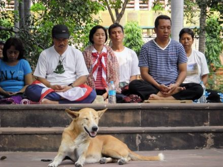 Does a dog have Buddha nature?