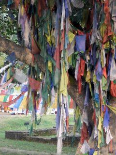 Prayer Flags at Maya Devi Temple, Lumbini, Nepal