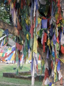 Prayer Flags at Maya Devi Temple, Lumbini, Nepal